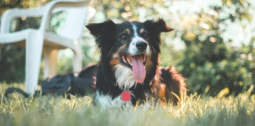 Hundeschule Verhaltenstherapie Kurse in München mit Gruppentraining