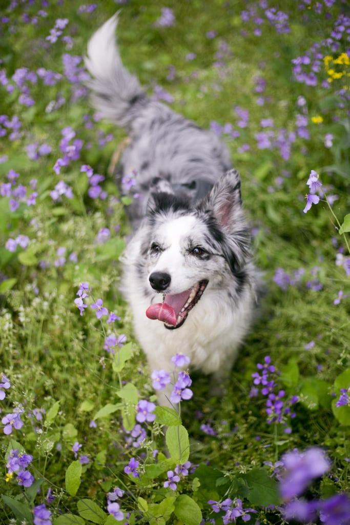 Anmeldung Hundeschule