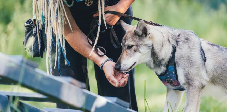 Beschäftigung hundeschule münchen